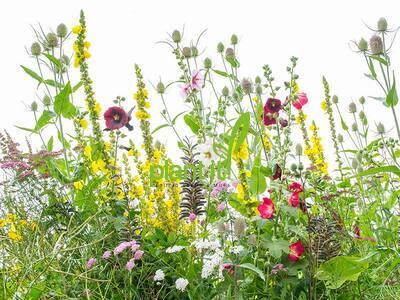 Bloemenmengsel meerjarig