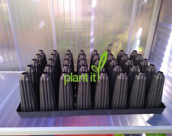 Palmzaailing tray 40 gaats